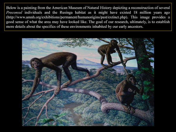 Paleoanthropology8